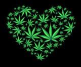 Cannabis and heart disease